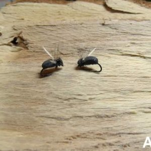 Летяща мравка
